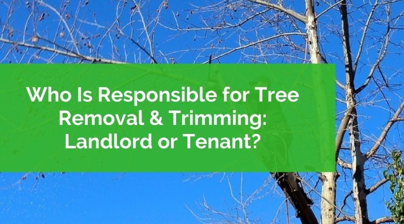 Who Is Responsible for Tree Removal & Trimming: Landlord or Tenant?