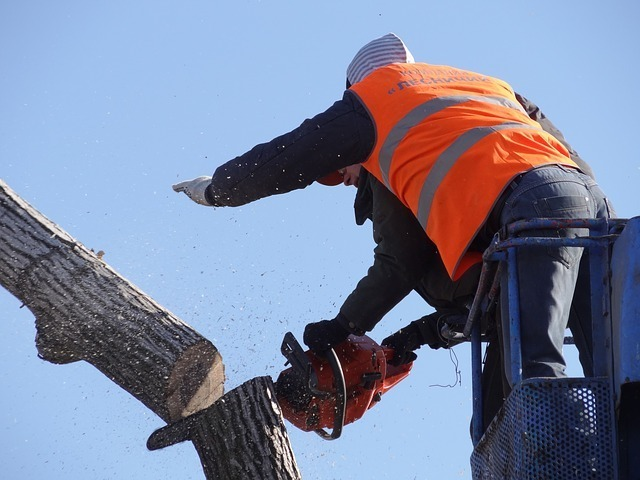 removal and maintenance of trees